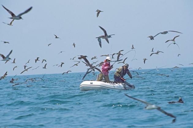 ジョイクラフト 釣り